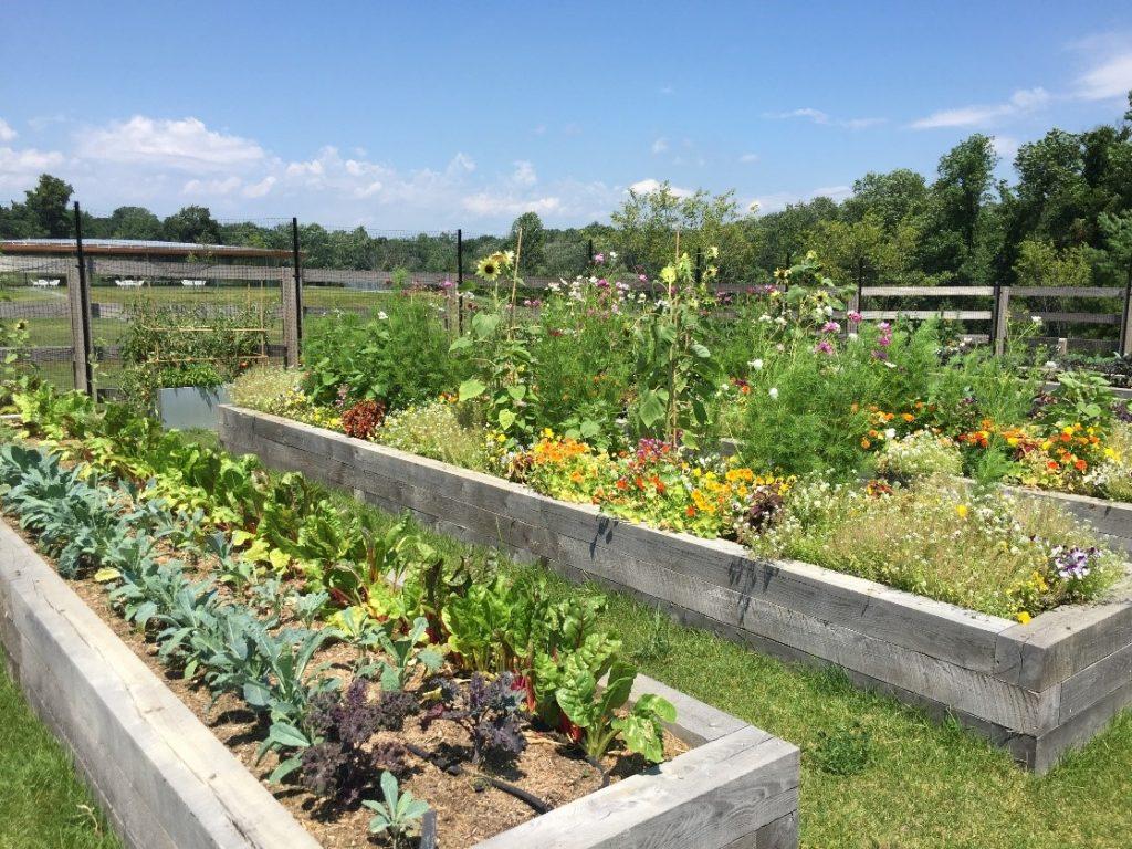 Vibrant community garden