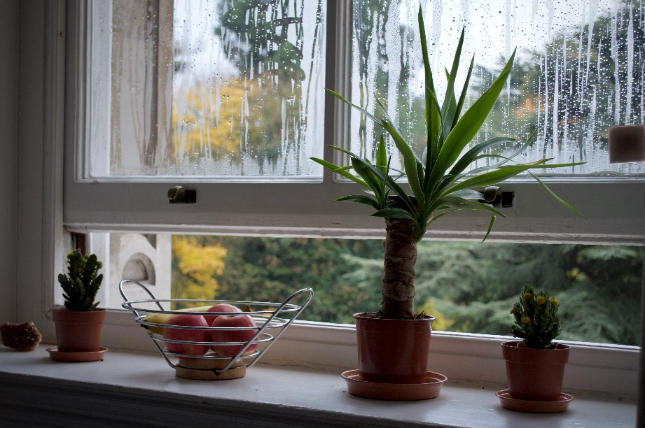 Open window with small plants